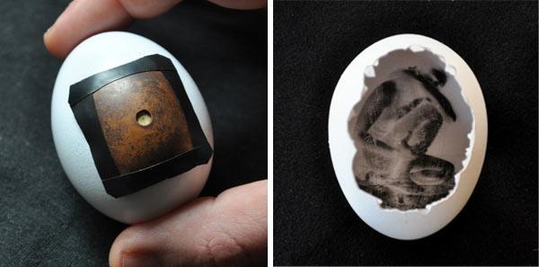 핀헤그, 달걀로 만든 핀홀 카메라