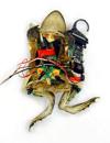 Hertz-Frog-Highres