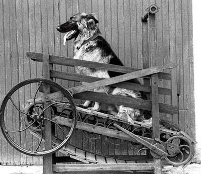 Dog-Treadmill