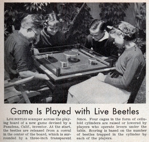 Lrg Beetle Game