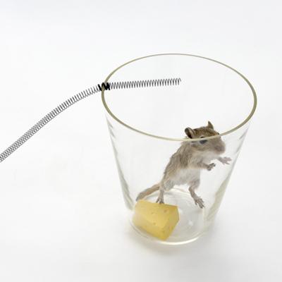 mouse_trap35.jpg