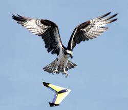 Hawkbot