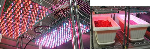 LED_plant.jpg