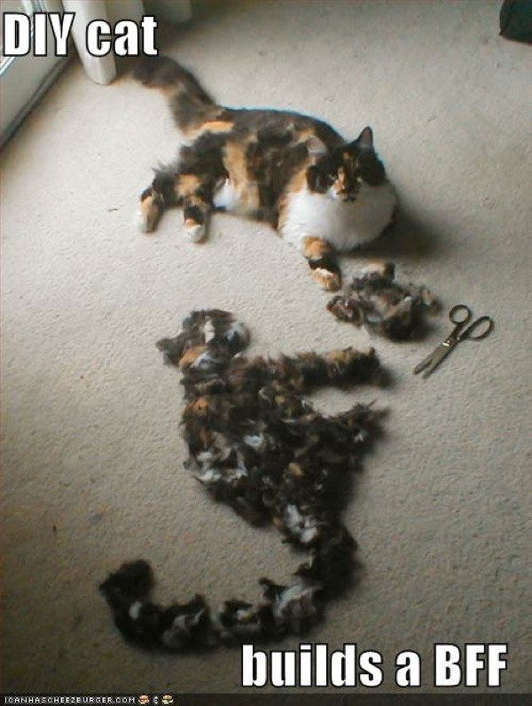 2008 08 Funny-Pictures-Your-Cat-Has-Built-A-Bff