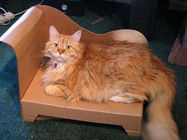 kitty_chaise_lounge.jpg