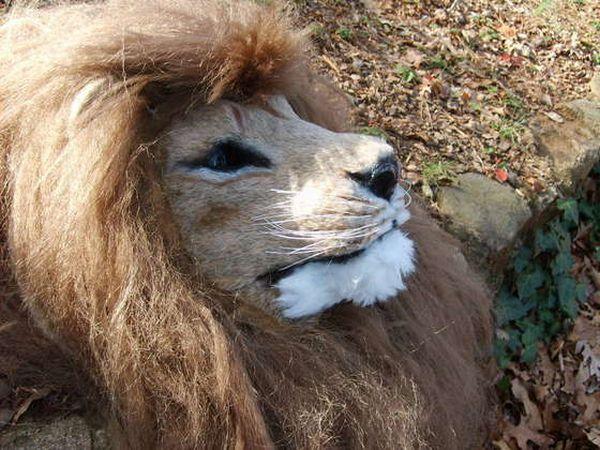 lion mask.jpg