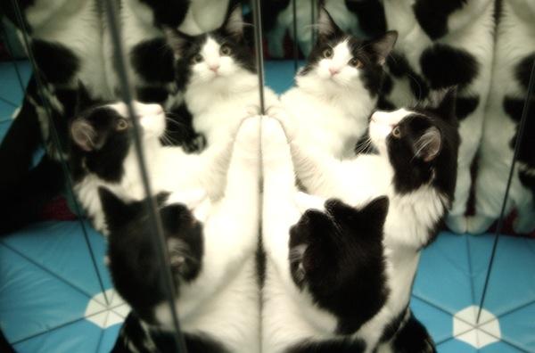 catlieidescope.jpg