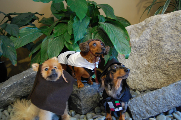 & HOW TO - Make Star Wars Halloween Costumes for Dogs | Make:
