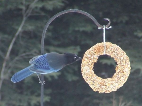 bird wreath.jpg