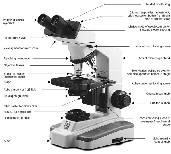 Parts Of A Microscope And Their Function