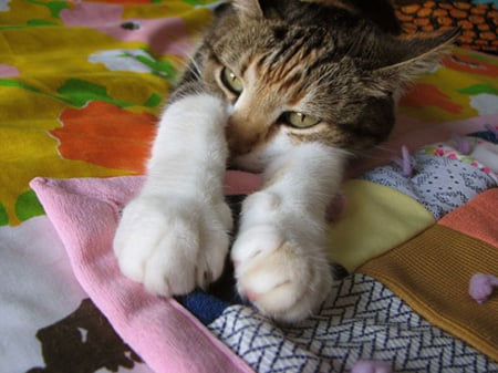 Flearepellent Cat