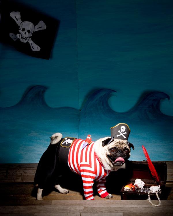 & How-To: Pirate Dog Costume | Make: