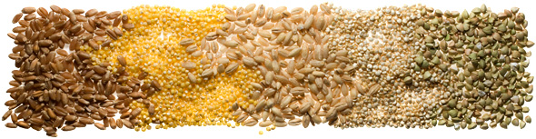 Chow Grains101