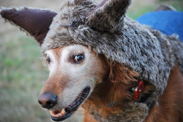 big-bad-wolf-bigdog.jpg