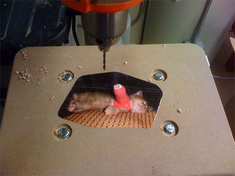 saic-drillpress-kitten.jpg