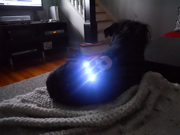 light_up_dog_hoodie.jpg