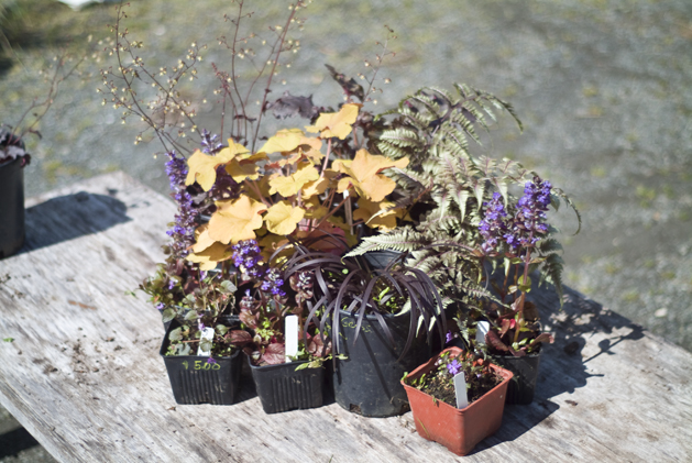 potted_plants_14.jpg