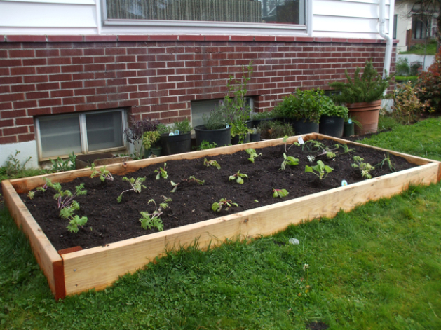 Build your own raised garden bed make for Making raised garden beds
