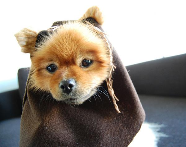 Star_Wars_Day_Crafts_Ewok_Dog.jpg