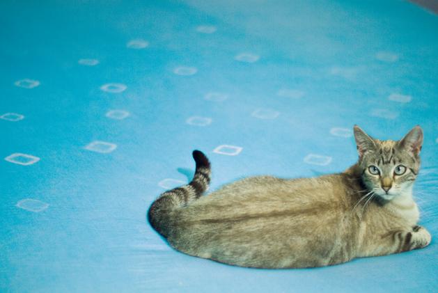 dye_final_cat.jpg