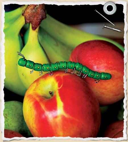 pencil-caterpillar.jpg