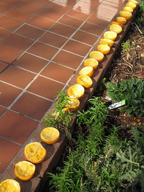 orange_peel_kindling.jpg
