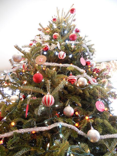 martha_tree_zoom.jpg