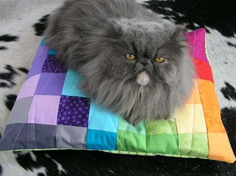 color_spectrum_pet_bed.jpg