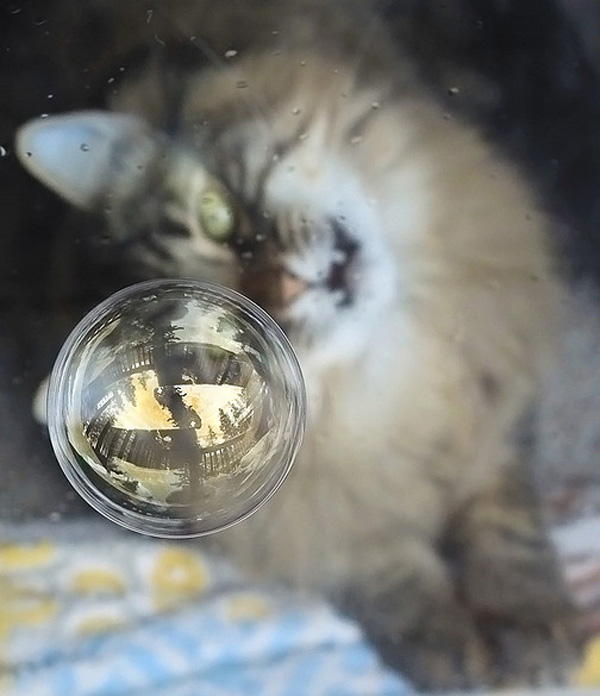suckaface-bubble-photography-bubba.jpg