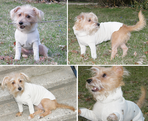 20 Minute Dog Sweater from Old Cardigan | Make: