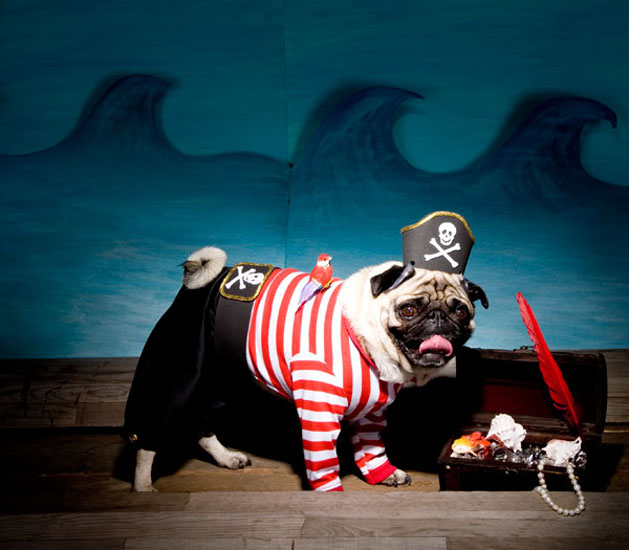 pug-pirate-CRAFT.jpg