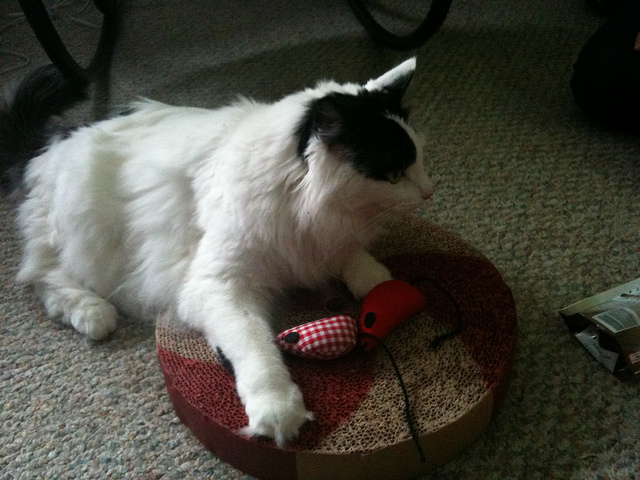 ronnie_cat_toys.jpg