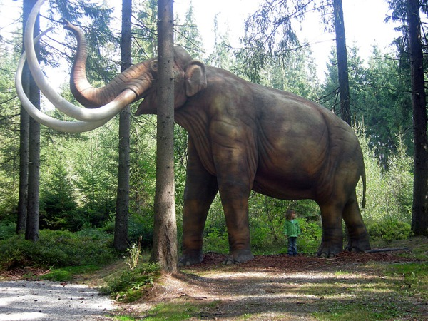 800Px-Mammoth Mammut Model