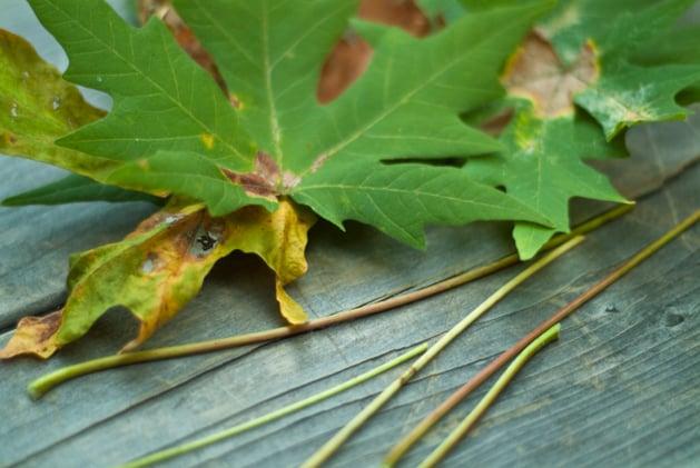 craftzine_leaf_garland_02.jpg