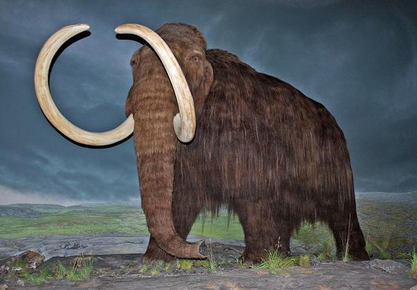 Woolly Mammoth-Rbc