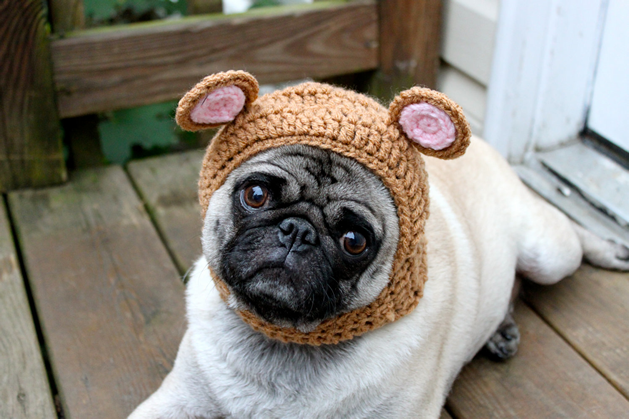 pickles_pug_bear.png