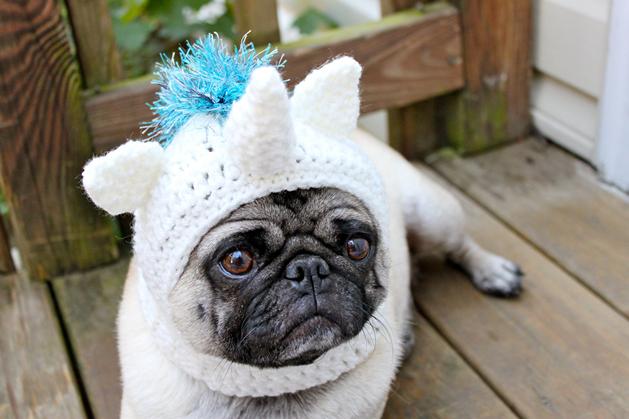 pug_crochet_unicorn_hat.png