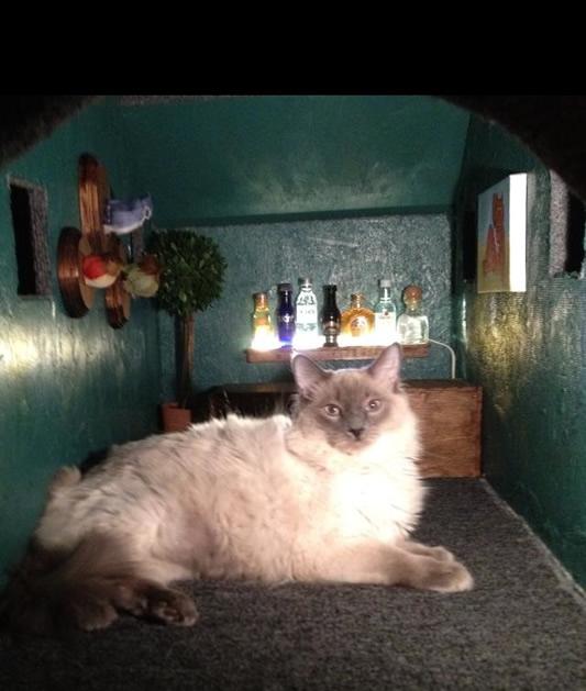 cat_at_condo_interior.jpg