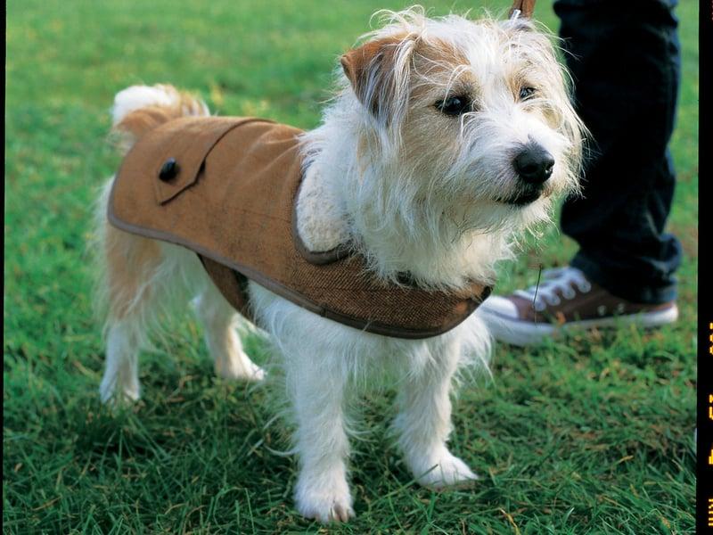 country gent tweed coat