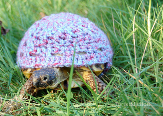 tortoise-cozie-3