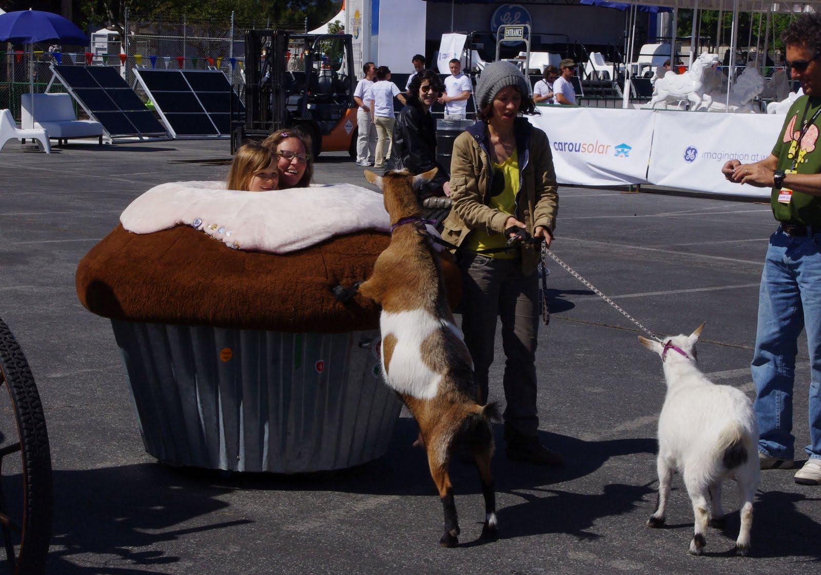 heidi kooy goats at maker faire