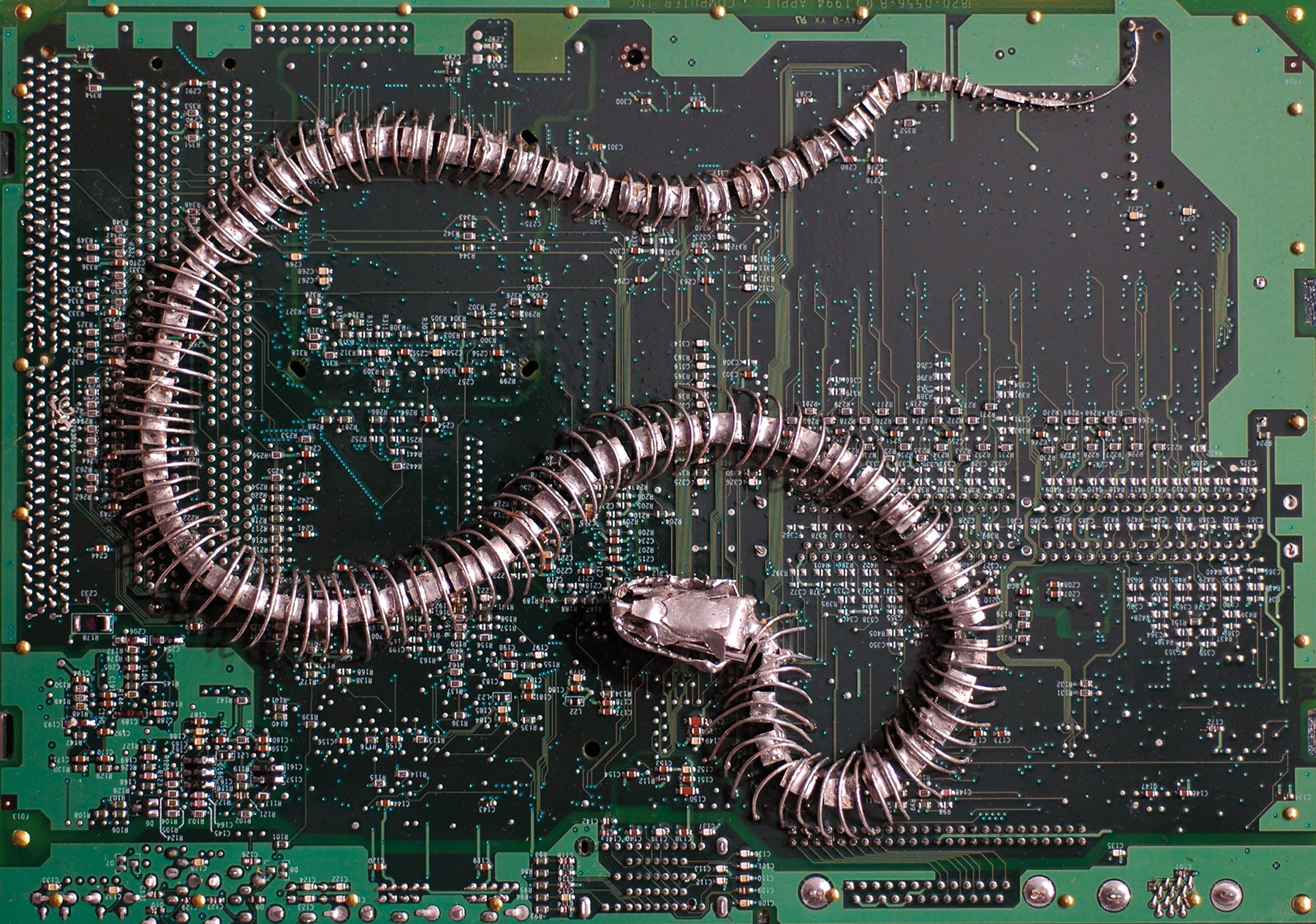 faux snake skeleton sinuously curved mounted on a circuit board background