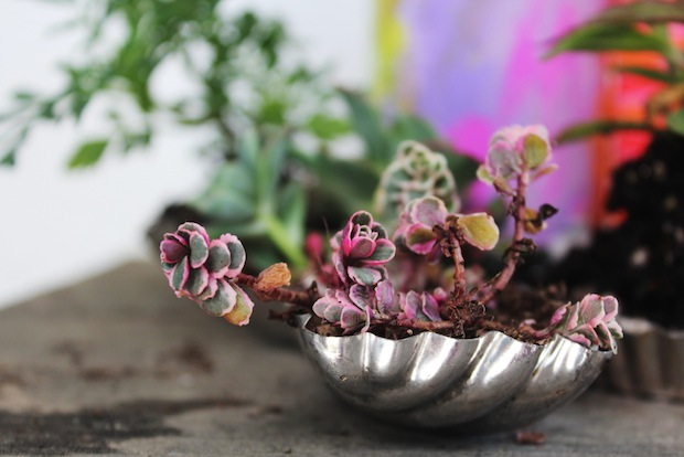 01_tiny_plantings_flickr_roundup