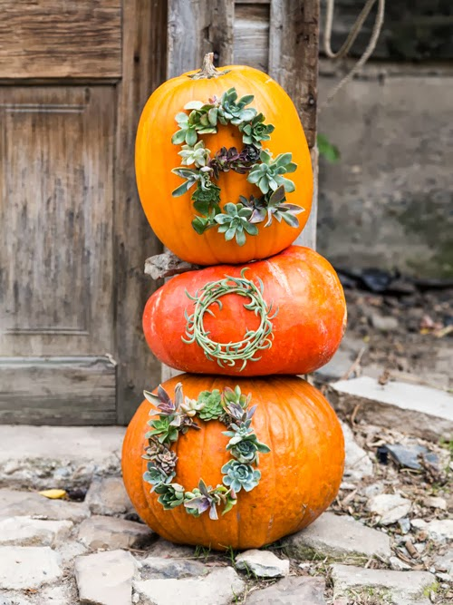thehousethatlarsbuilt_succulent_worded_pumpkins