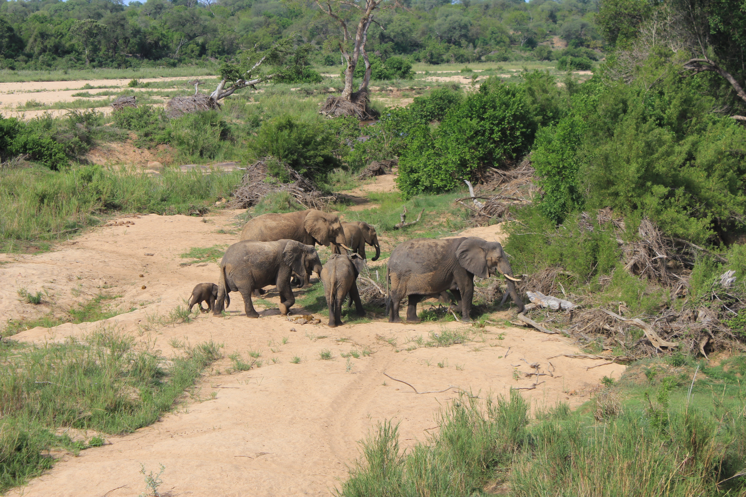 This wildlife spotting featured a family of elephants.
