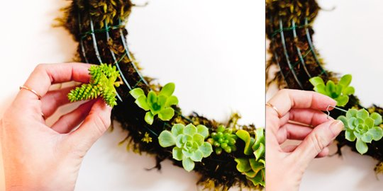 succulent wreath-2