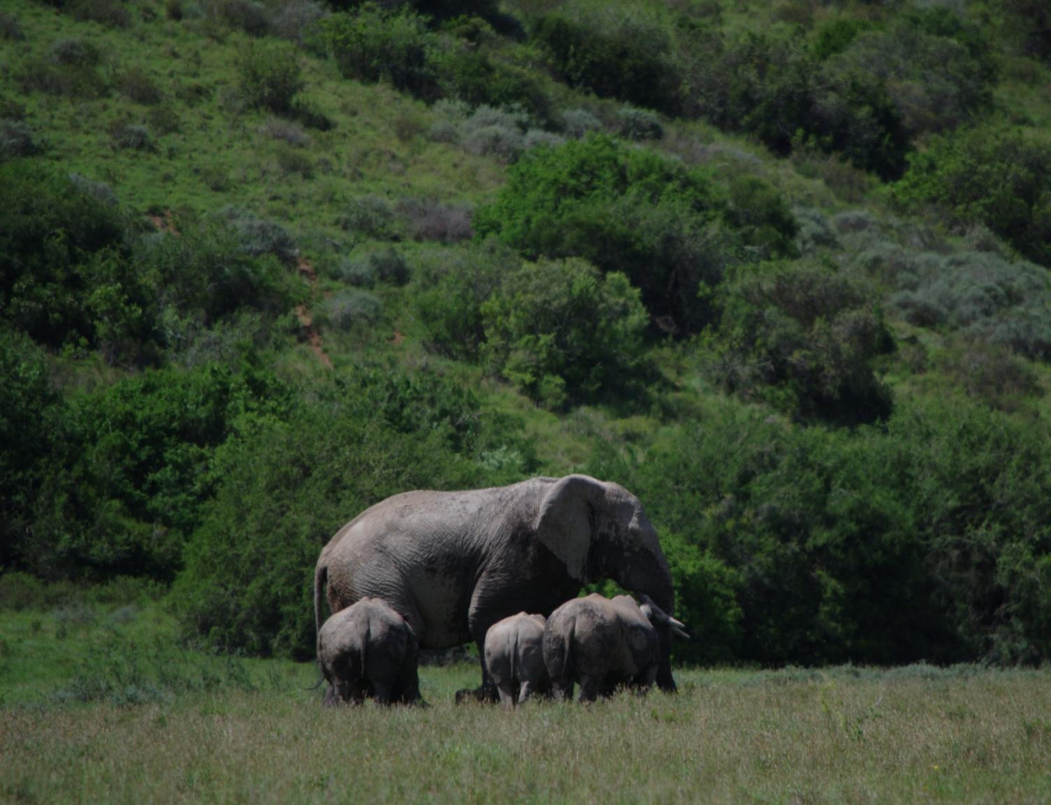 A rare encounter: rhino with elephant