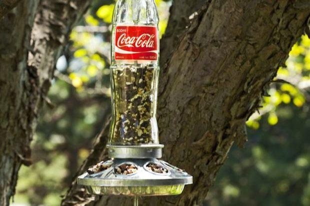 birdsandblooms_soda_bottle_bird_feeder_01