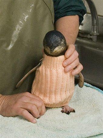 knitted-penguin-jumper-1