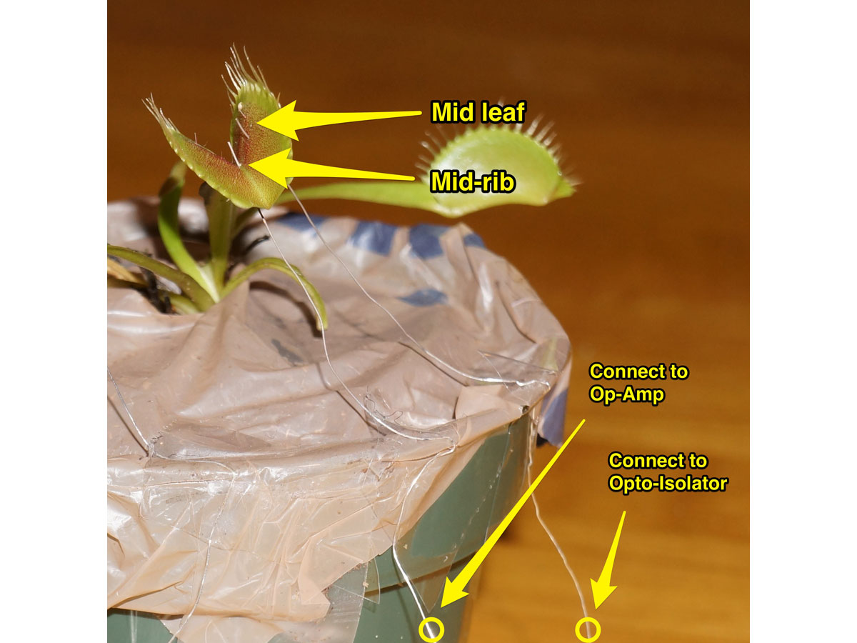 Biorobotics: Hack a Venus Flytrap for Remote Control